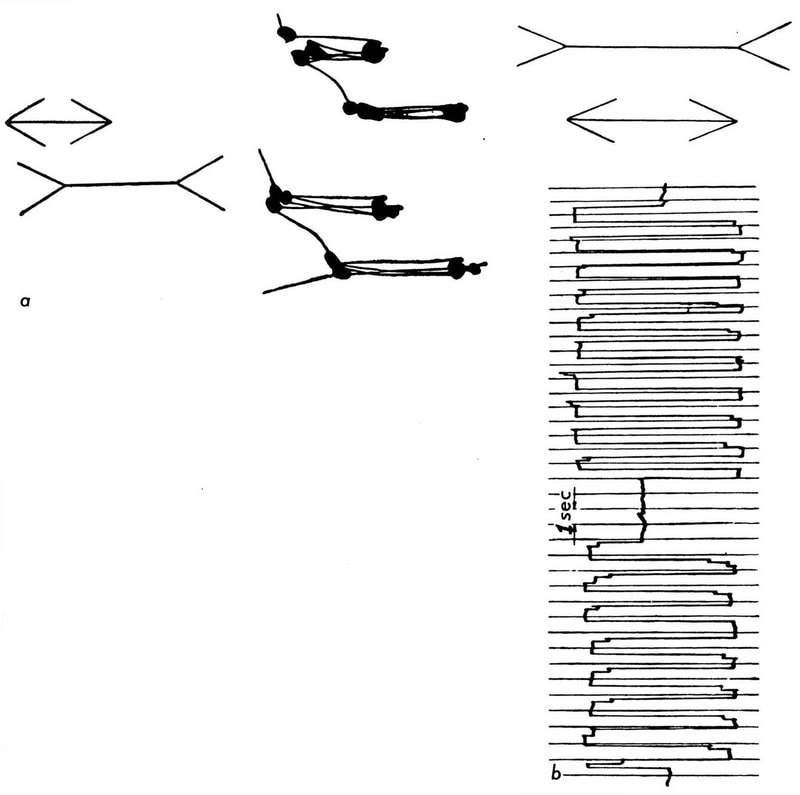 """Optical illusion: both horizontal lines are of equal length. Records of eye movements accompanying comparison of length. a) On stationary photographic paper; b) made with photokymograph"" (Yarbus, 1967)."
